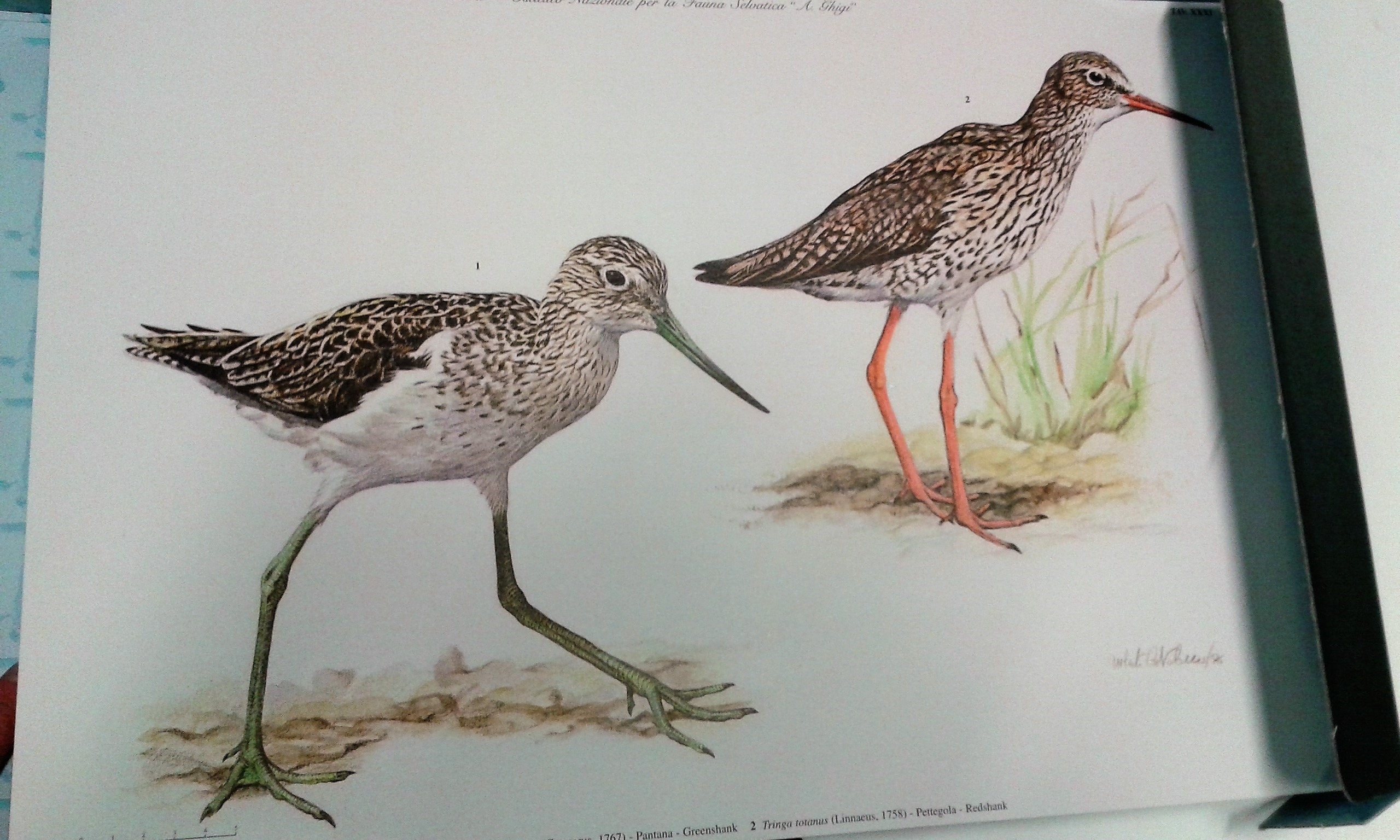Iconografia degli uccelli ditalia vol. iii iconography of
