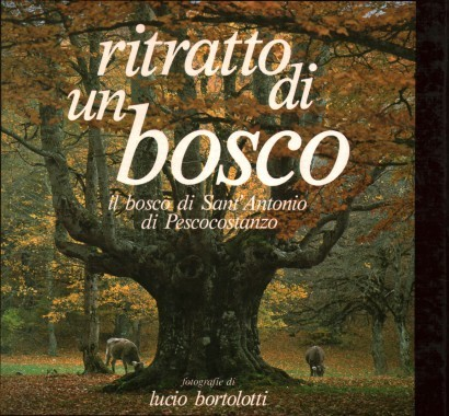 Portrait of a forest:the Sant'antonio wood in Pescocostanzo